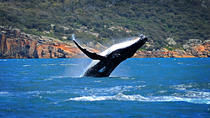 Sydney Harbour Whale Watching Sightseeing Tour via Helicopter and Sailing Yacht, Sydney, Dolphin &...