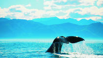 5-Day South Island Coastal Tour from Christchurch Including Blenheim and Abel Tasman National Park, ...