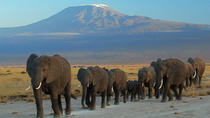 2 Days Amboseli National Park Safari, Nairobi, Multi-day Tours