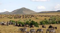 3 Days Masai Mara Camping Safari All Inclusive, Nairobi, Multi-day Tours