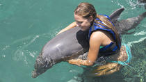 Funtastic Dolphin Encounter in Punta Cana, Punta Cana, Swim with Dolphins