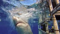 5-Day Great White Shark Dive Adventure, San Diego, Shark Diving