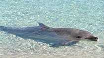 Tangalooma Resort Moreton Island Day Cruise with Optional Dolphin Feeding, Brisbane, Dolphin & ...