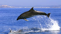 Gibraltar Dolphins Full Day Trip from Costa del Sol