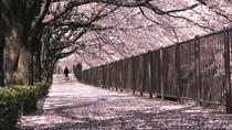 Cherry Blossom Viewing and Tokyo Tower Tour, Tokyo, Bus & Minivan Tours
