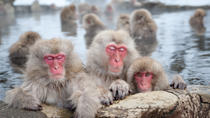 Jigokudani Monkey Park, Hot Springs and Zenko-ji Temple in Nagano, Nagano, Full-day Tours