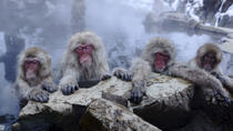 Nagano Day Trip from Tokyo: Snow Monkeys, Hot Springs and Zenko-ji Temple, Tokyo, Day Trips