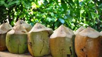 Dominican Republic Cultural Tour with Coconut Factory Visit , Punta Cana, Half-day Tours