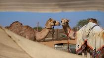 Al Ain City Sightseeing Tour - The Garden City, Dubai, Private Sightseeing Tours