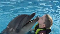 Swimming with Dolphins in Hurghada, Hurghada
