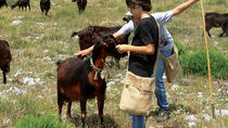 Serras de Aire e Candeeiros Natural Park - Route of the Shepherd Full Day Private Tour from Lisbon,...