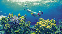 4-Day Cairns and Great Barrier Reef Tour, Cairns & the Tropical North, Multi-day Tours