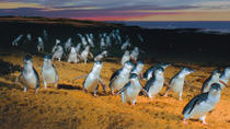 Phillip Island: Penguins, Koalas and Kangaroos Day Tour from Melbourne, Melbourne, Day Trips