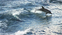 South Coast Day Trip from Sydney with Jervis Bay Dolphin Watching Cruise, Sydney, Dolphin & Whale ...
