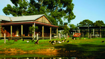 Tobruk Australian Outback Experience including Aussie BBQ Lunch, Sydney, Day Trips