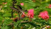 Nature Tour from Port of Spain, Trinidad and Tobago, Nature & Wildlife