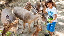Bali Zoo General Admission Ticket, Bali, Nature & Wildlife