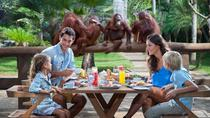 Breakfast with the Orangutans at Bali Zoo, Bali, Nature & Wildlife