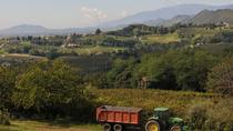 Small-Group Prosecco Wine Route Tour from Venice with Wine Tasting, Venice, Wine Tasting & Winery ...