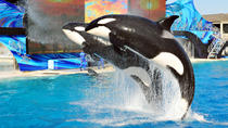 SeaWorld San Diego with Transport, Los Angeles, Theme Park Tickets & Tours