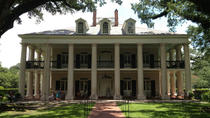 Experience Cajun Country: Swamp Boat Adventure and Plantations Full-Day Tour from New Orleans, New...