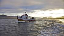 Puffin and Seal Watching Tour from Breiddalsvik, East Iceland, Day Cruises