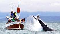 Traditional Whale Watching Tour from Húsavík, North Iceland, Dolphin & Whale Watching