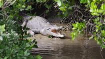 Whitsunday Crocodile Safari including Lunch, The Whitsundays & Hamilton Island, Nature & ...