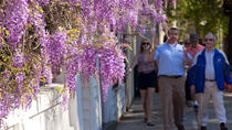 Charleston Strolls Tour, Charleston, Walking Tours