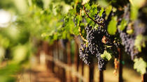 Malibu Wine Tour from Los Angeles, Los Angeles, Wine Tasting & Winery Tours