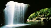 World Heritage Springbrook National Park Tour Including Natural Bridge, Gold Coast, Nature & ...