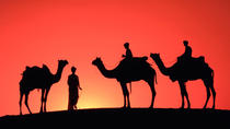Sunset Camel Ride in the Palm Grove of Marrakech, Marrakech, Nature & Wildlife