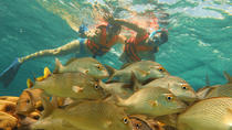 Half-Day Snorkeling Adventure in Puerto Morelos, Cancun, Other Water Sports