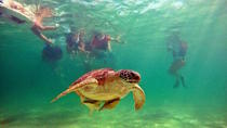 Swimming with Turtles and Cenotes Tour, Playa del Carmen, Nature & Wildlife
