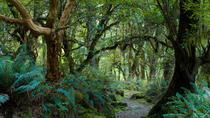 St Lucia Rainforest Walk, St Lucia, Nature & Wildlife