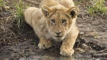 3-Day Kruger Park Wildlife Safari, Johannesburg, Multi-day Tours