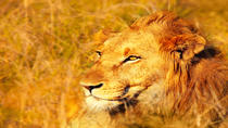 4-Day Kruger National Park Safari Tour from Johannesburg: Game Drives and Wilderness Walks, ...
