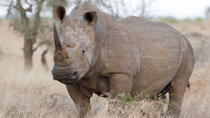 4-Day Kruger National Park Safari Tour from Johannesburg: Game Drives and Wilderness Walks,...