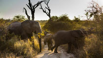 Big Five Afternoon Game Drive in Kruger National Park, Kruger National Park, Safaris
