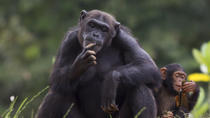 Jane Goodall Institute South Africa - Chimpanzee Eden Walking Tour, Kruger National Park, Nature & ...