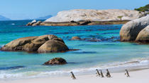 Marine Big 5 Adventure from Cape Town, Cape Town, Private Sightseeing Tours