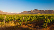 Stellenbosch Wine Tour from Cape Town, Cape Town, Wine Tasting & Winery Tours