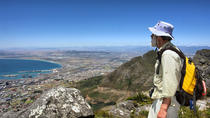 Table Mountain Hike in Cape Town, Cape Town, Day Trips