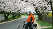 Exclusivo de Viator: Recorrido en bicicleta por los cerezos en flor de Washington DC, Washington ...