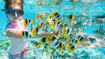 Full-Day Snorkeling Trip at Giftun Island from Hurghada, Hurghada, Snorkeling