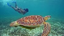 Private Akumal Experience Tour: Swim with Turtles and Cenotes, Cancun, Snorkeling