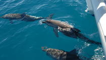 Hervey Bay, the Great Sandy Strait and Fraser Island Dolphin Watching Cruise from Hervey Bay, ...