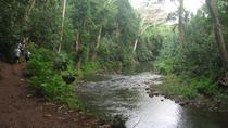 Wailua River and Secret Falls guided Kayak and Hiking Tour, Kauai, Hiking & Camping