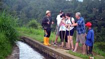 Private Jatiluwih Paddy Fields and Rainforest Trekking with Local Farmers in Bali, Bali, Private ...