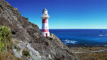 Palliser Bay and Coastal Delights Tour from Wellington, Wellington, Half-day Tours